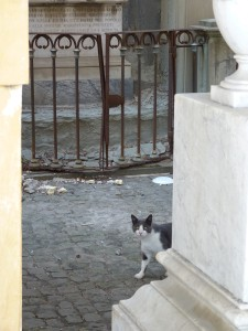 rom-katzen-friedhof