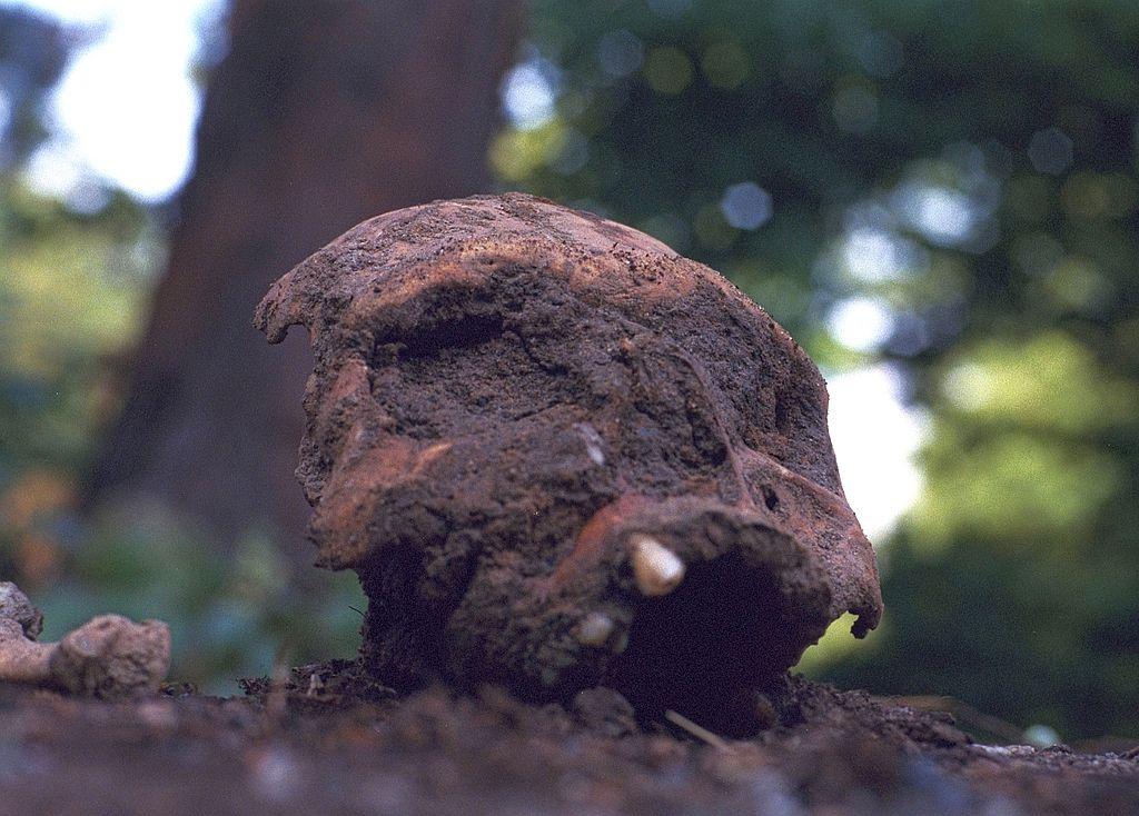 Bei Umgrabarbeiten versehentlich an die Oberfläche beförderter Schädel auf dem Friedhof Melaten, Köln (Foto: © Túrelio (via Wikimedia-Commons) / Lizenz: CC-BY-SA-3.0-de)