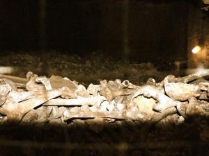 katakomben-wien-stephansdom-schaedel-gebeine