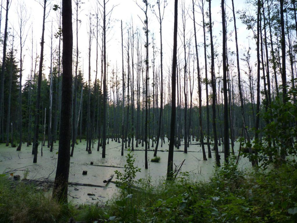 Moor-Landschaft im Biotop Gierloz