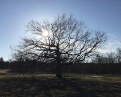 Baum-abendsonne