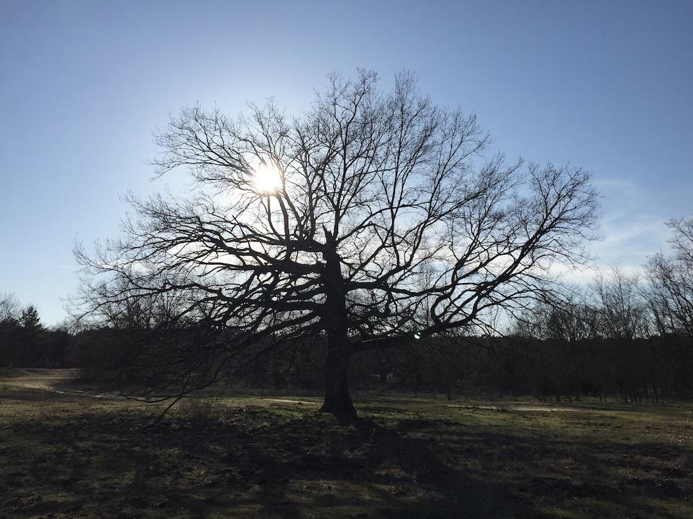 11 Grunde Sich In Baume Zu Verlieben Der Schwarze Planet